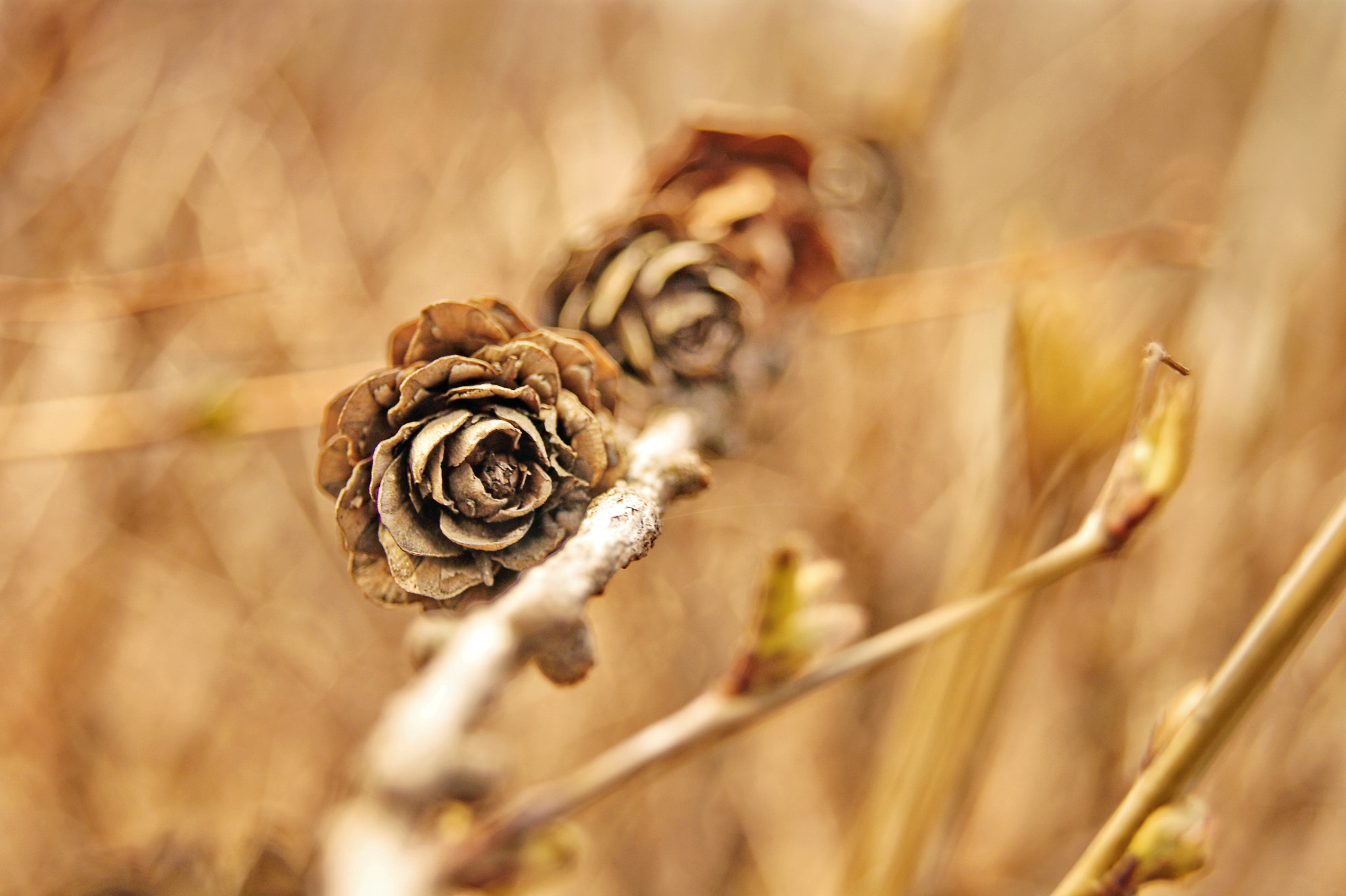 Photograph Wooden roses by Ekaterina Elizarova on 500px