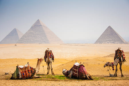 4 Camel with pyramid by Heather Balmain on 500px