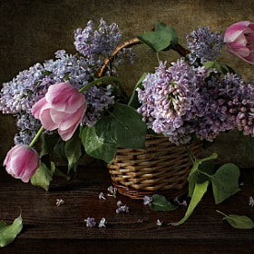 Lilac blossoms by Elena Kolesneva (ElenaKolesneva) on 500px.com