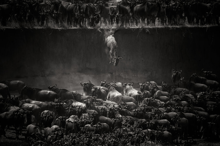 Photograph The great migration by Nicole Cambré on 500px