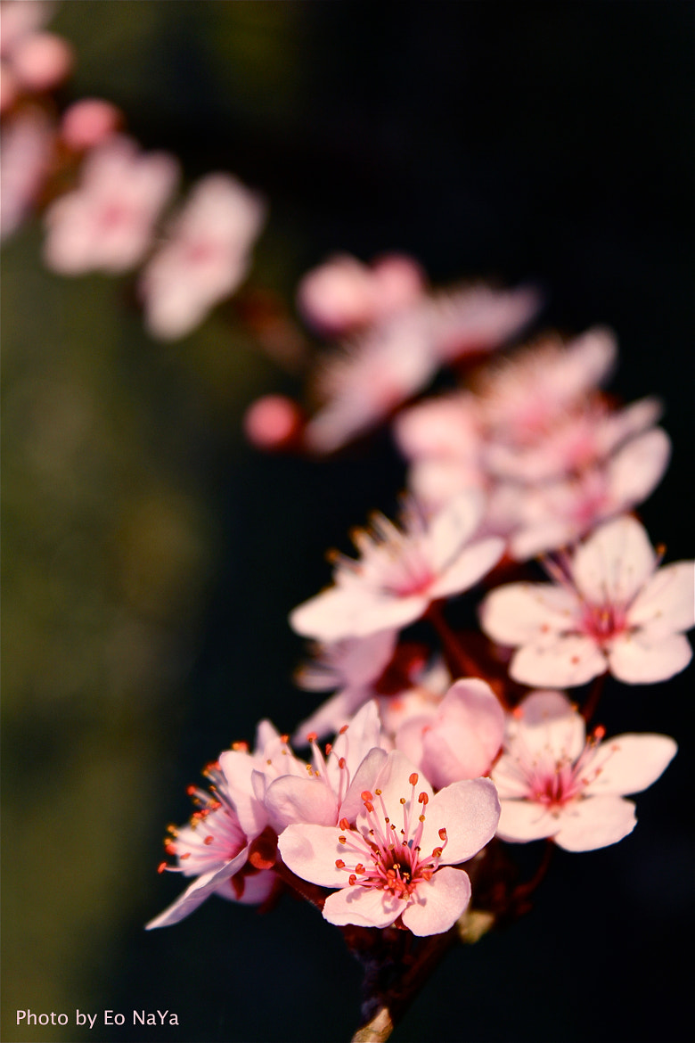 Photograph Spring has arrived  by Eo NaYa on 500px