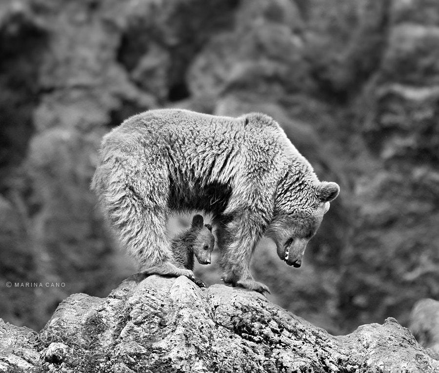 Photograph Bear Cub by Marina Cano on 500px