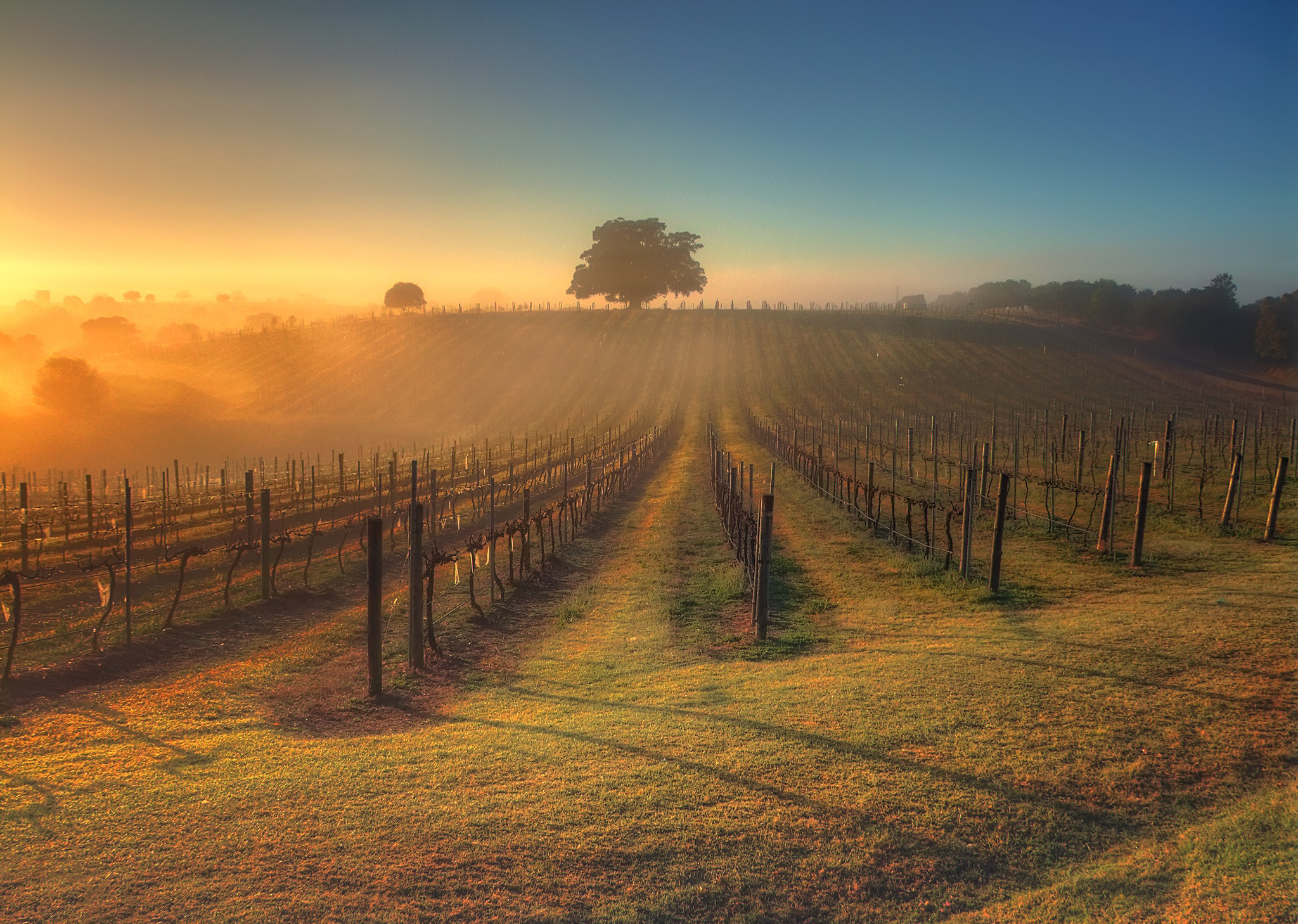 Photograph Let There Be Wine by Steve mcdermott on 500px