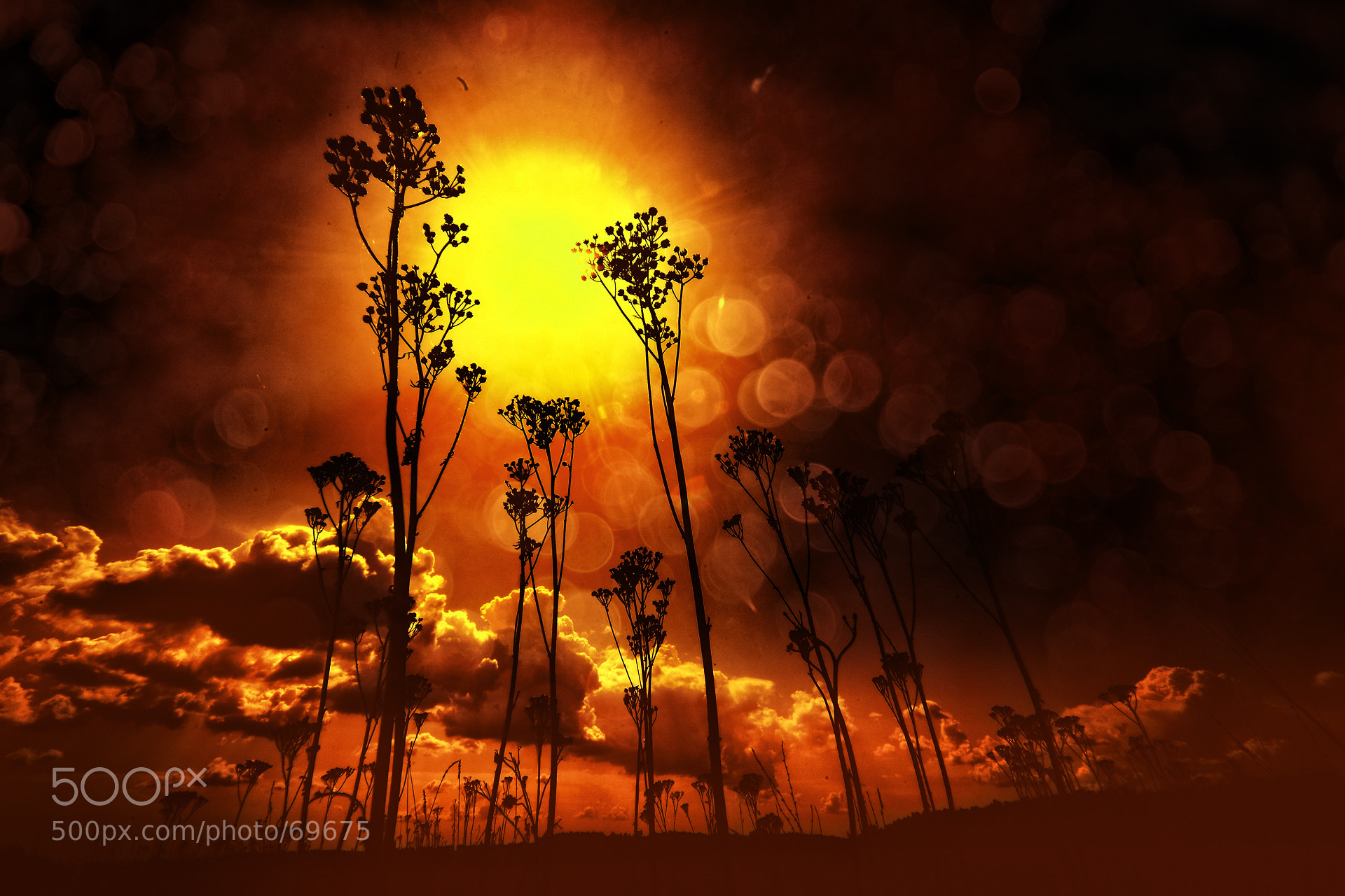 Photograph Spectrum - Red (new world) by Sergey Smolenko on 500px