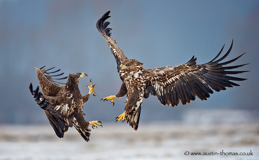 Eagle Interaction