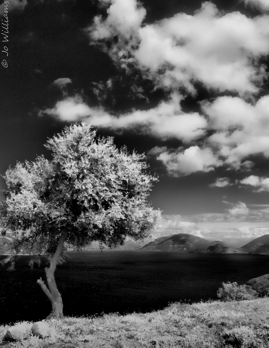 Photograph iR by jo williams on 500px