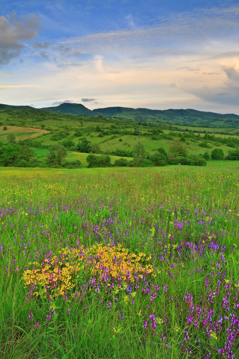 Photograph Spring field by Giovanni Santostefano on 500px