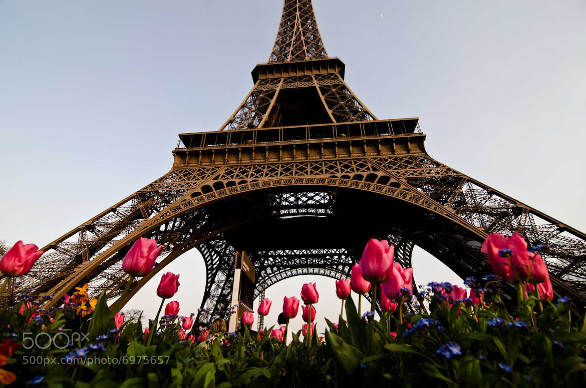Photograph April in Paris by Ryan Kasak on 500px