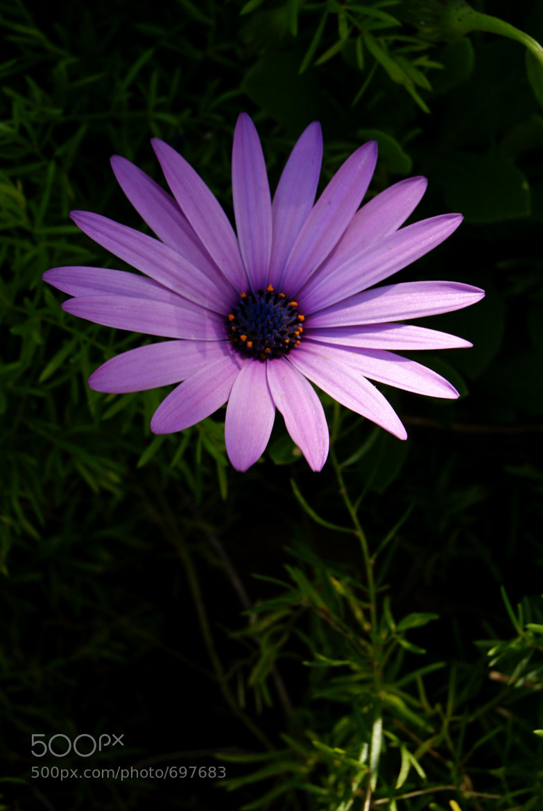 Photograph purple flower by Lynn Ruby on 500px