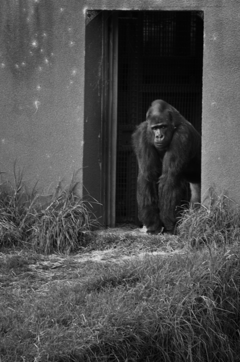 Photograph You're Not On The List - 04/25/12 by Jaime Wojick on 500px