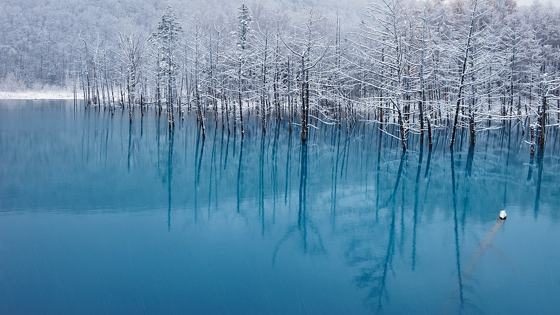 Photograph Blue Pond - So Cool! by Kent Shiraishi on 500px