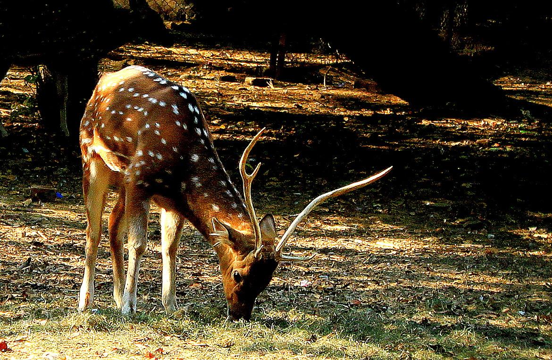 Photograph The graze... by Samrat  Mukhopadhyay on 500px