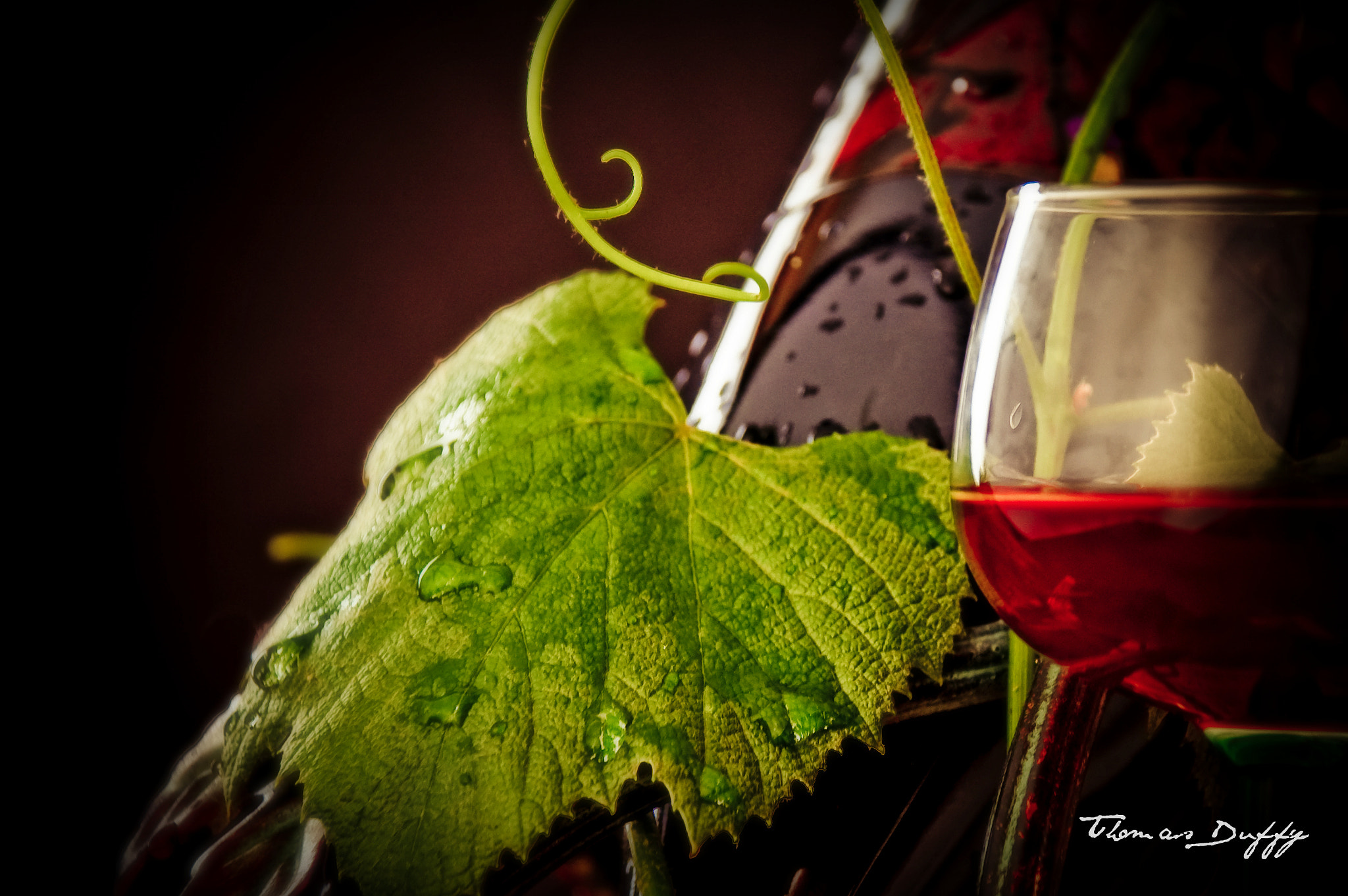 Photograph Red Wine by Thomas Duffy on 500px