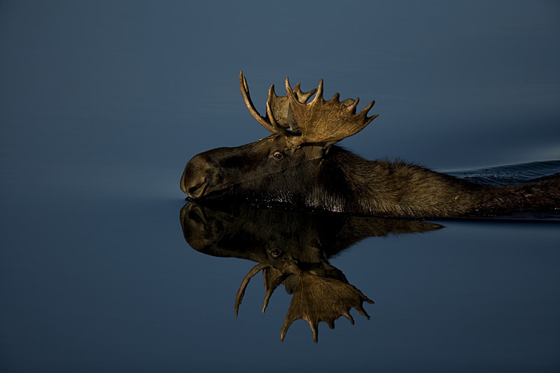 Photograph Swimming along by Steve Shuey on 500px