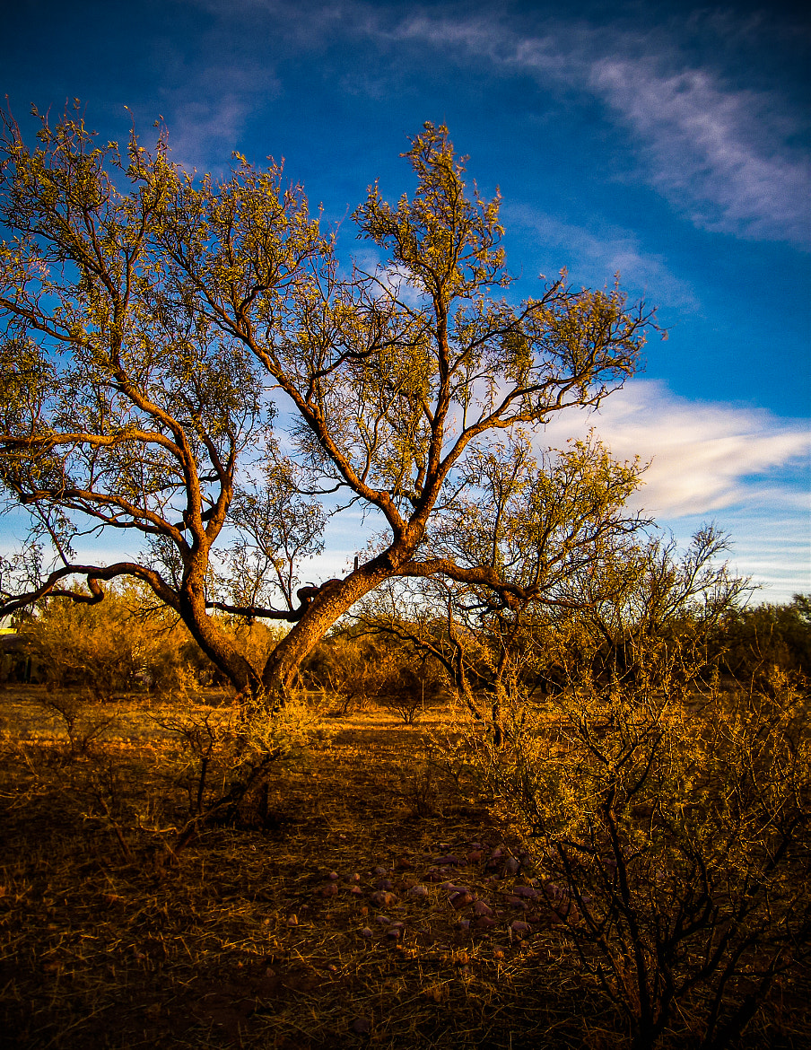 Photograph Mesquite by Tim Schneider on 500px