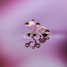 .....in your heart.  Drops on the dead petals