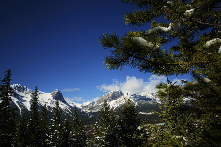 Canmore through the trees