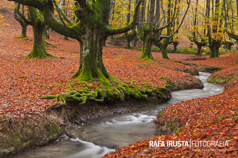 Photograph Fall in the forest by Rafa Irusta on 500px
