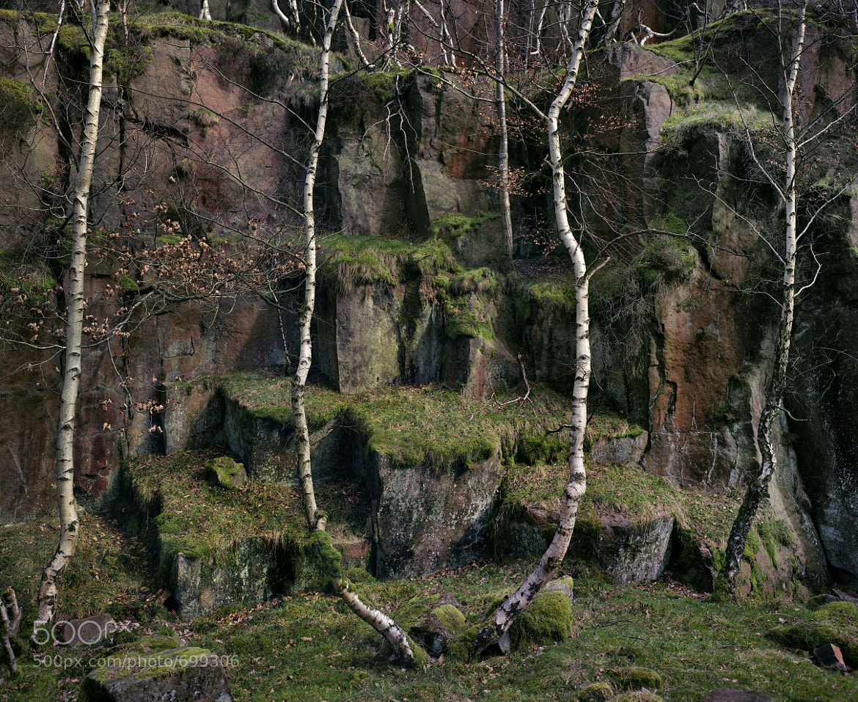 Photograph Bolehill Quarry, Peak District by Tim Parkin on 500px