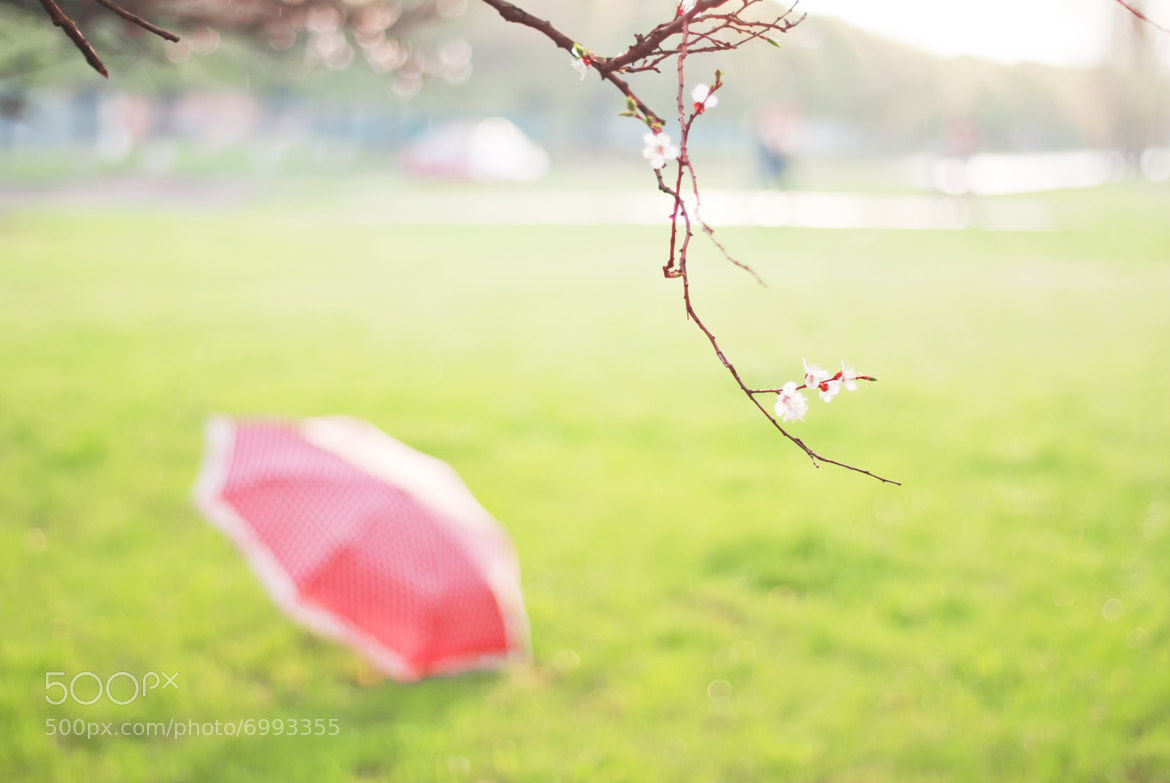 Photograph Umbrella by Strawberry Mood on 500px