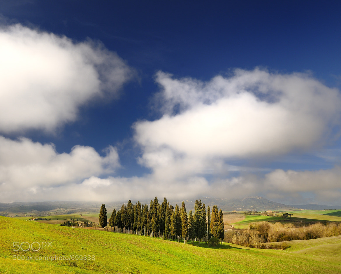 Photograph Tuscan cypresses by mauro maione on 500px