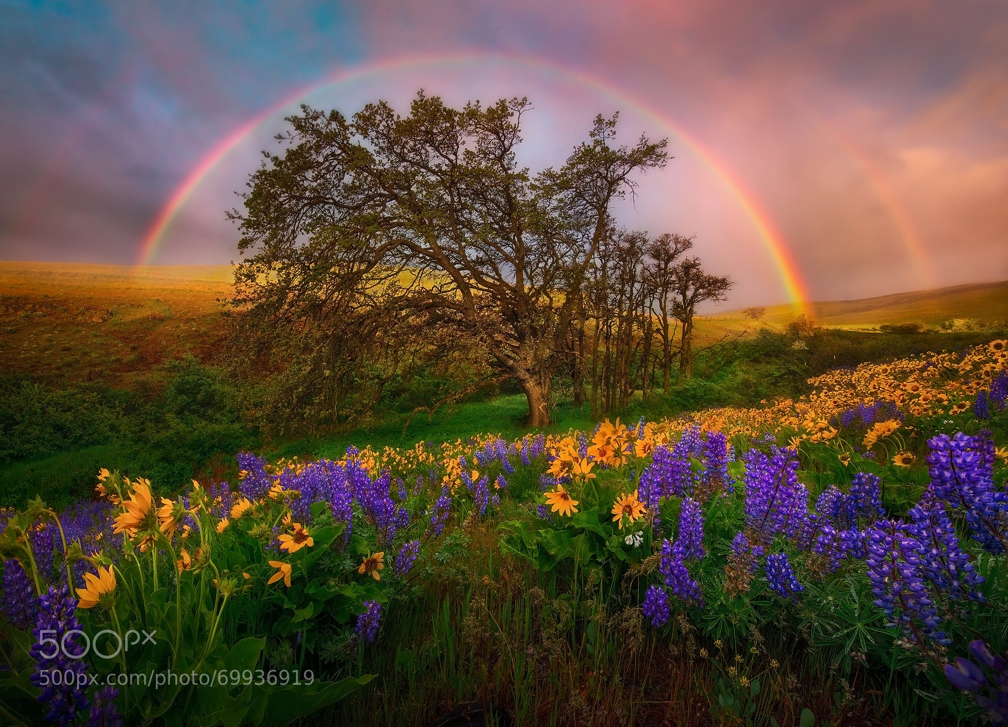 rainbow landscape photography