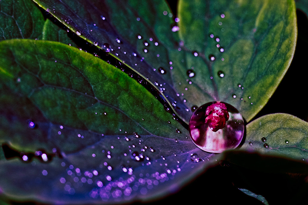 Photograph droplets by Nataly Golubeva on 500px