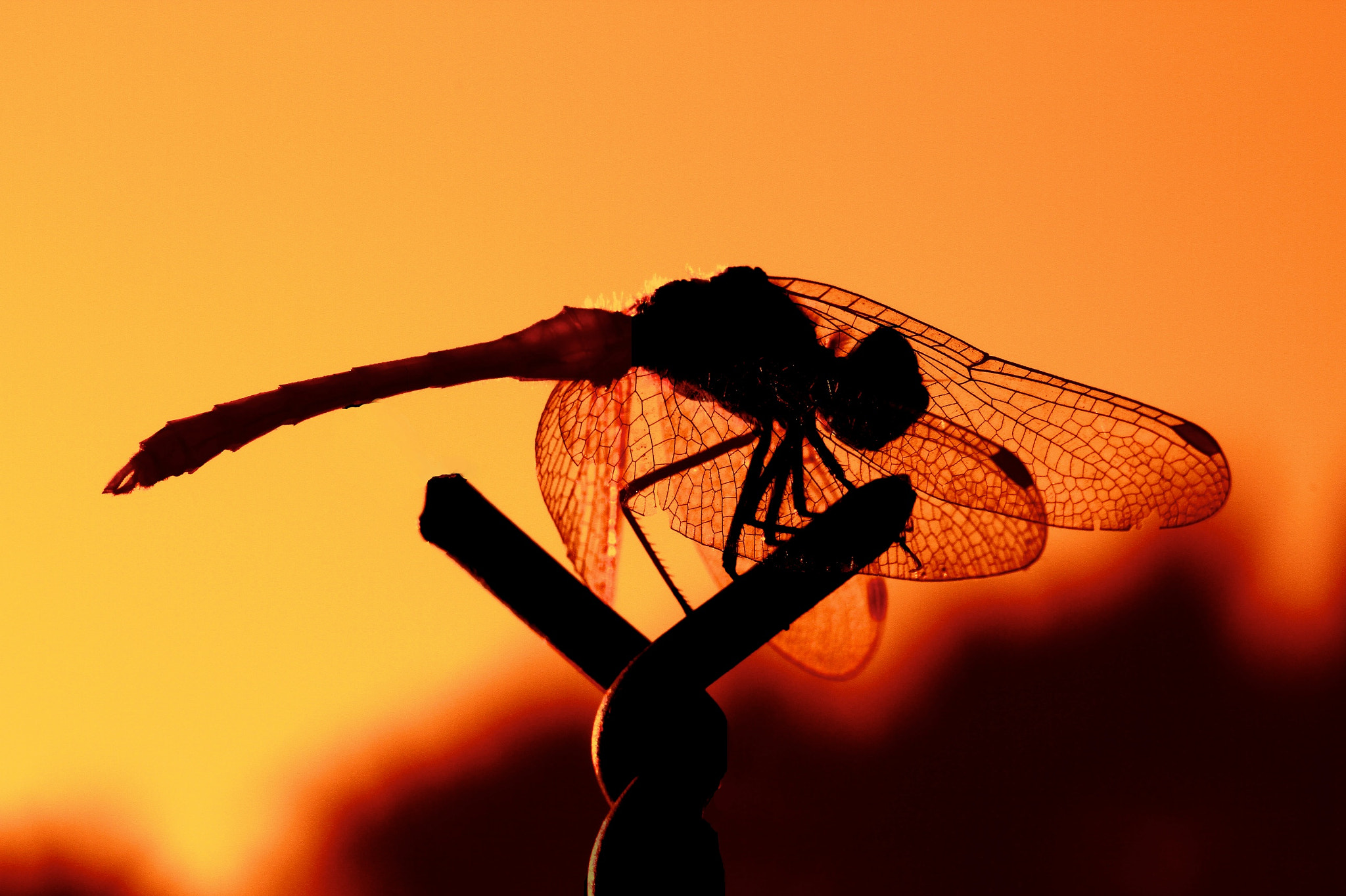 Photograph Dragon Fly by Matteo Zin on 500px