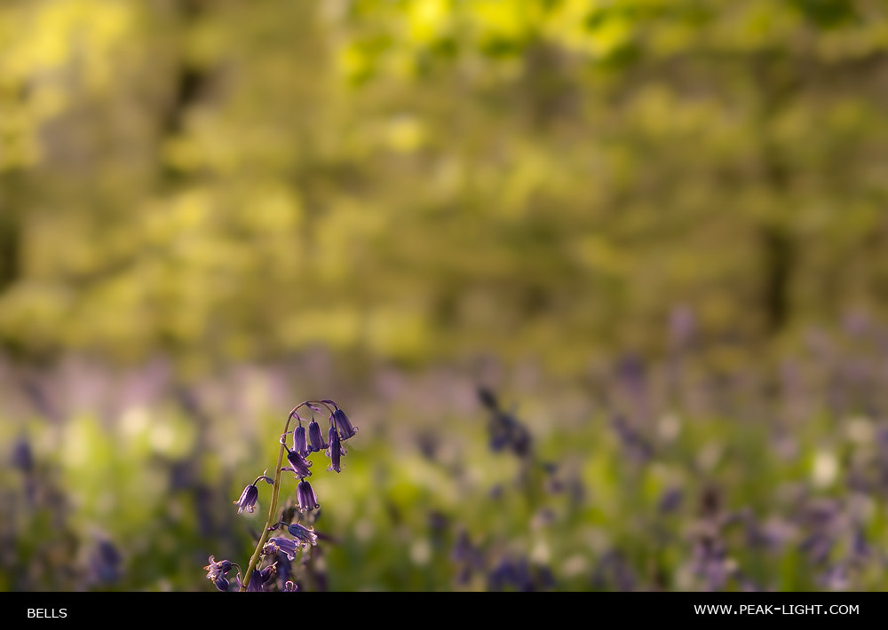 Photograph Bells by Martin Levers on 500px
