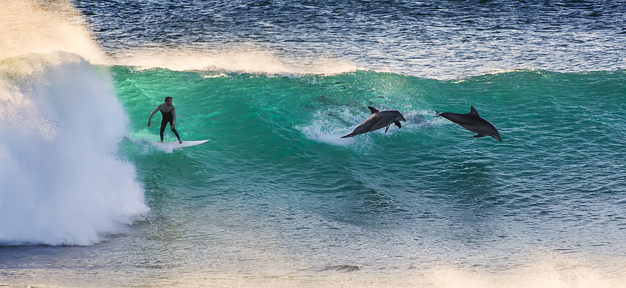 Surfing with Dolphins by Matt Hutton on 500px.com