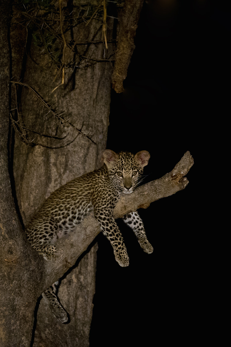 Photograph Don't be late mum by Marc MOL on 500px