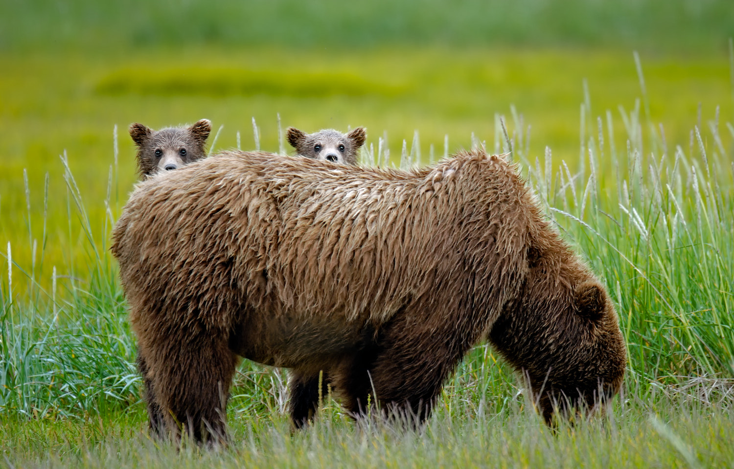 Photograph Bearly Concealed by Shane McDermott on 500px