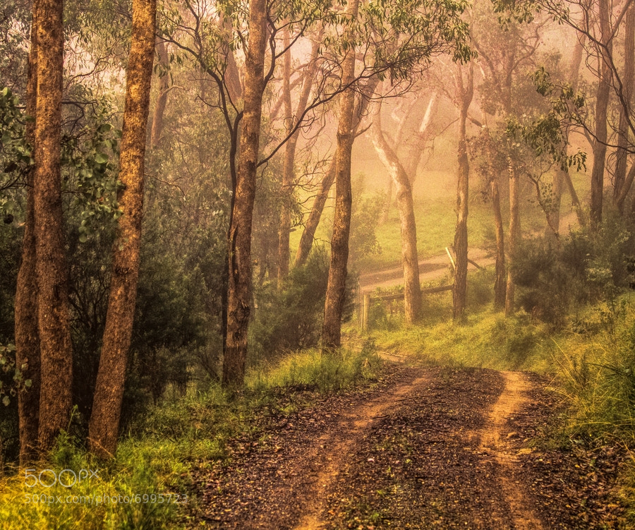 Photograph Misty Road by Margaret Netherwood on 500px