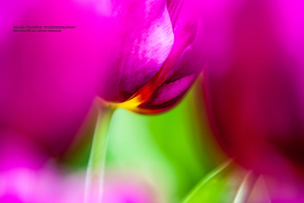Photograph Flower by Alan Pang on 500px