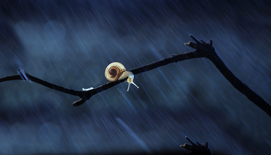 Photograph rainy night by Mei xiang on 500px