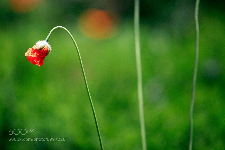 Photograph Pretty spring flower by Cristobal Garciaferro Rubio on 500px