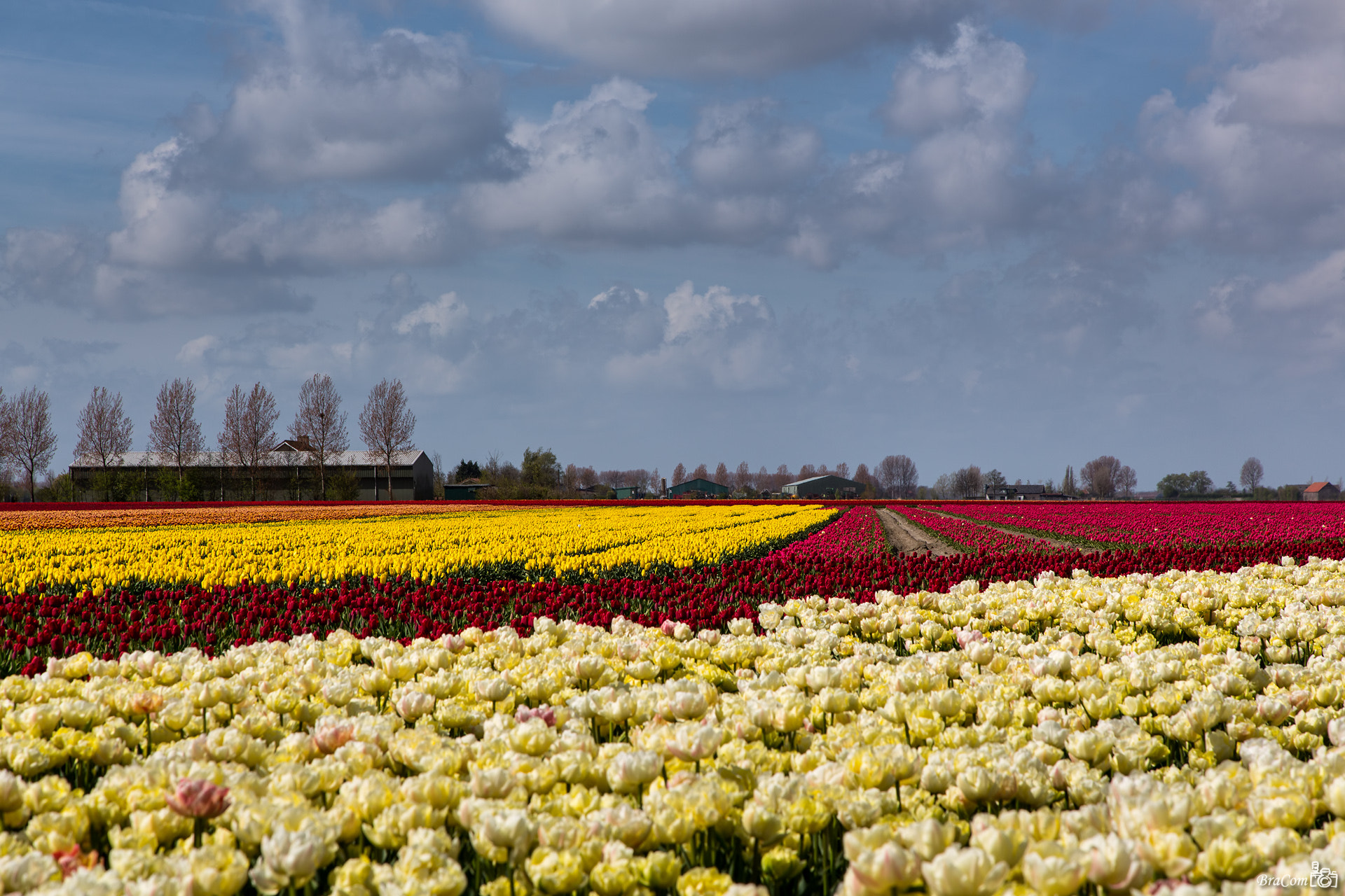 Photograph Tulips in Rainbow Colors by Bram van Broekhoven on 500px