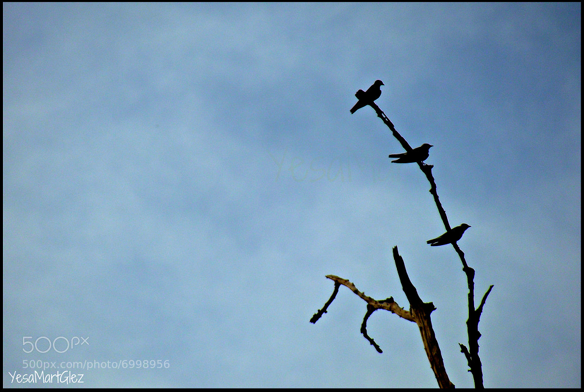 Photograph 3 little birds by Yesaluv MartGlez on 500px