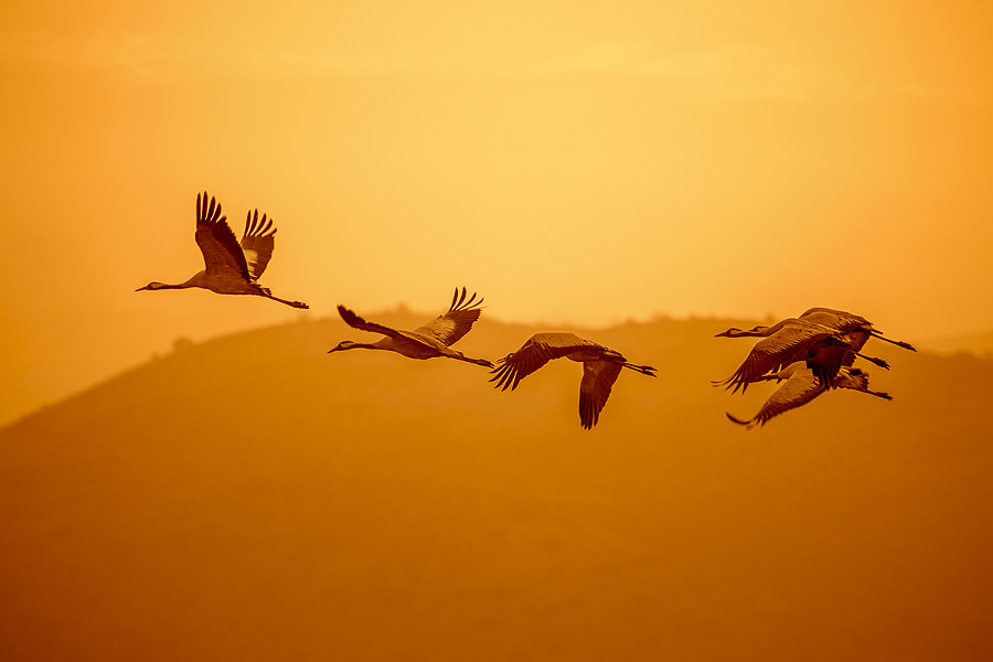 To meet the dawn by Anatoly Barbalat on 500px.com