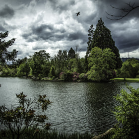 Crystal Springs Rhododendron Garden...portland oregon