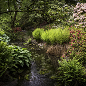 Crystal Springs Rhododendron Garden, portland Oregon.