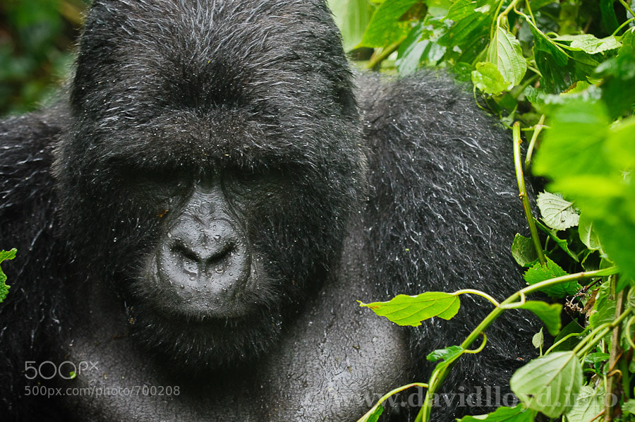 Photograph Kigoma by David Lloyd on 500px