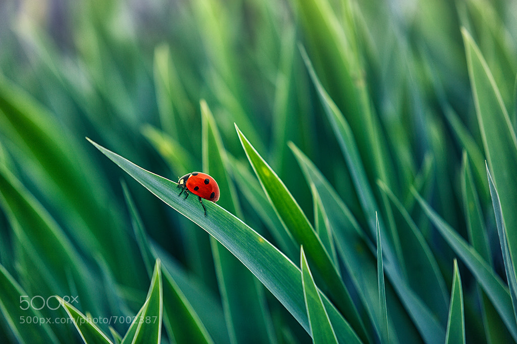 Photograph Lost in green by Marco Carmassi on 500px