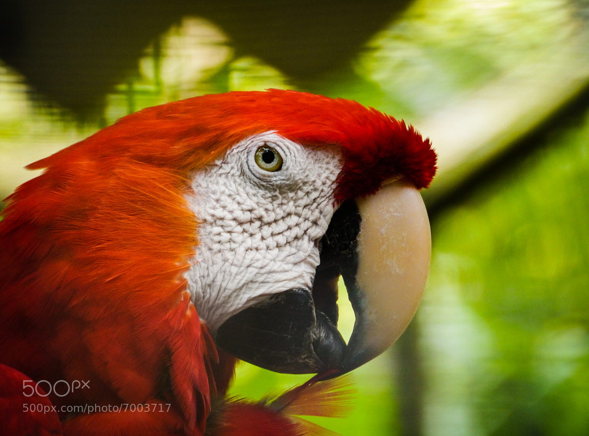Photograph Macaw blimey by James Southorn on 500px