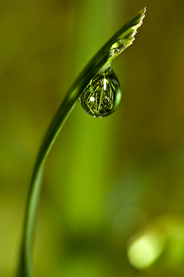 Photograph World in a drop of dew by Jaroslava Melicharová on 500px