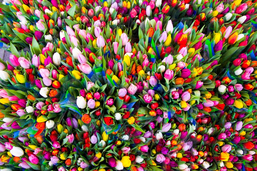 Spring in Copenhagen! by Alana de Haan