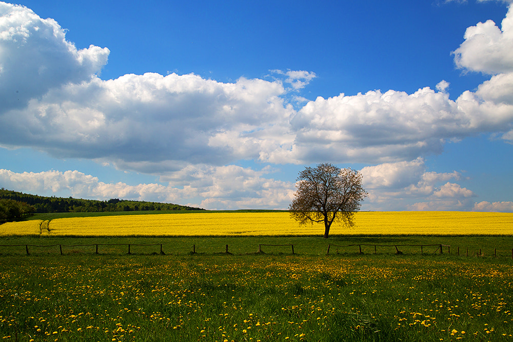 Photograph country of bliss by Sabine  Reuss on 500px