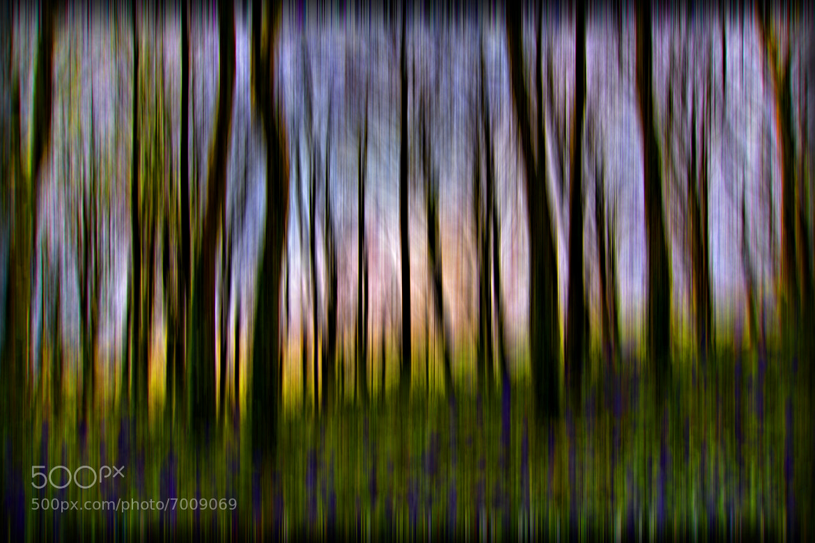 Photograph Sunset Forest by Noel McManus on 500px