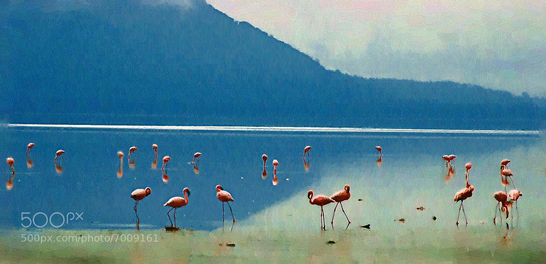 Photograph Flamingos at Lake Nakuru, Kenya by Alan Frankel on 500px