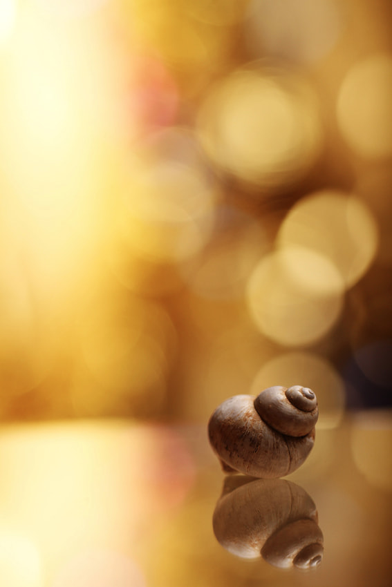 Photograph Snail by Mathieu Irthum on 500px